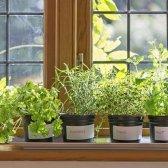 5 ideas para el jardín cultivar alimentos en pequeños espacios