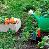 La cronología del jardinero cuándo plantar, agua y hierbas y verduras alimentos