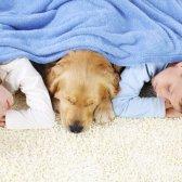 Dada comentarios la orina de los animales domésticos a los olores y en la alfombra