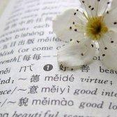 palabras intraducibles en el amor
