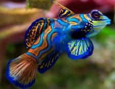 Top 12 peces más bellos del mundo