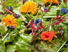 27 flores comestibles para aclarar sus comidas y el paladar