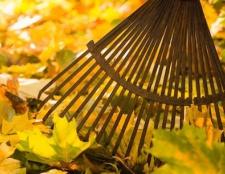 4 pasos para preparar su jardín para el invierno