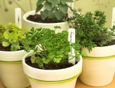 5 pasos para un jardín de hierbas en el interior