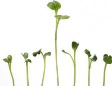 Aún la germinación? ¿Por qué los alimentos germinados están de moda (y realmente bueno para usted)
