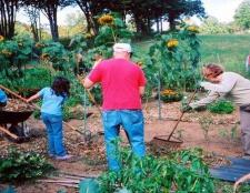 Se introducen 10 buenas ideas mercado de las flores del jardín superior para principiantes